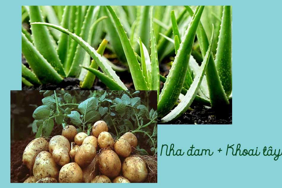 Nha đam và khoai tây
